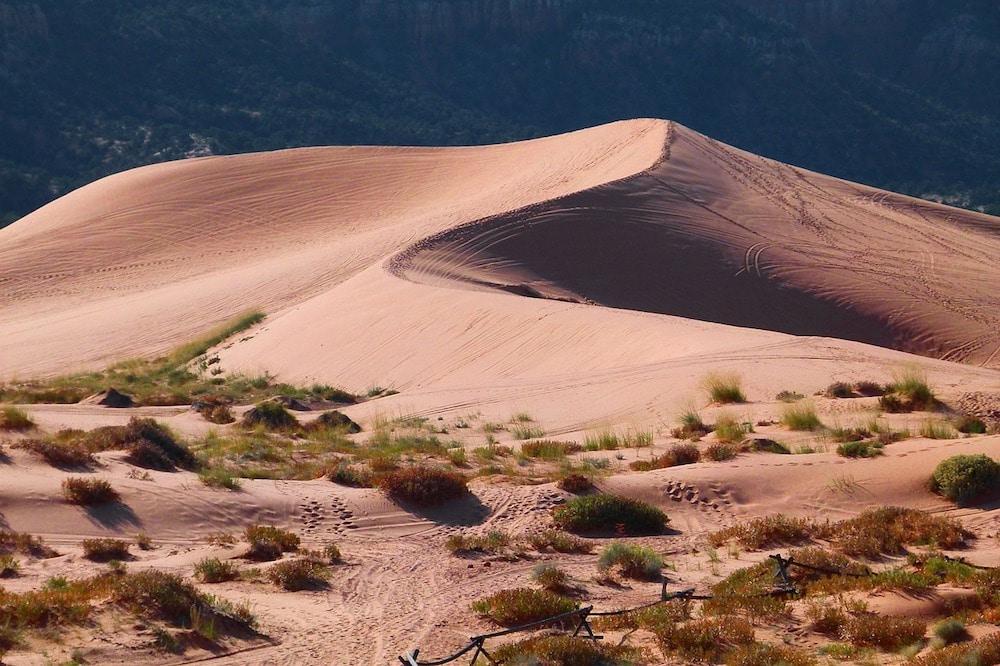 Rajasthan desert safari experience