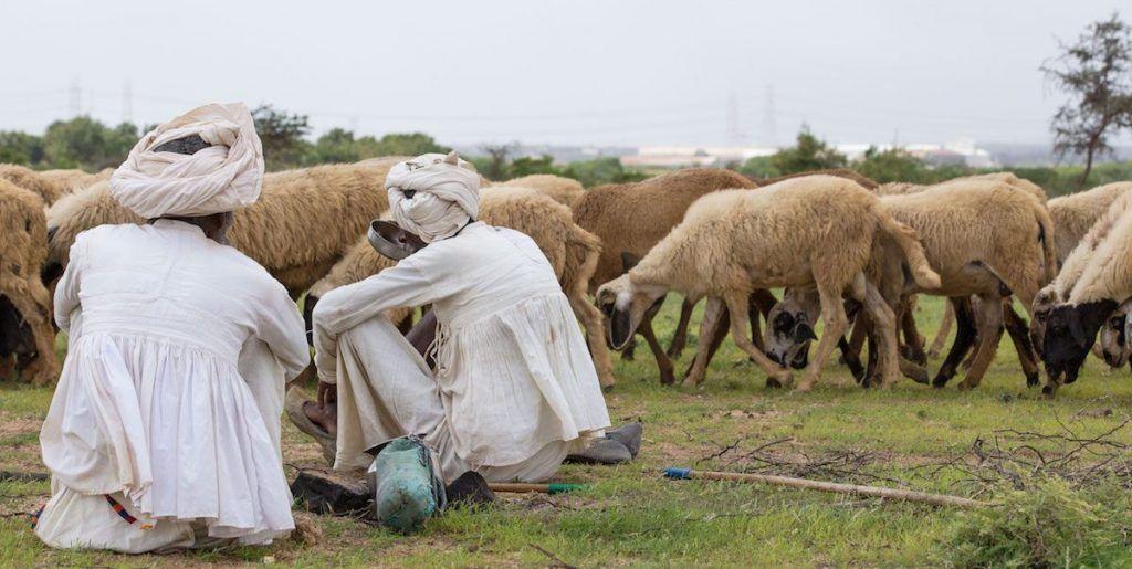 pastores rabari en Kutch gujarat