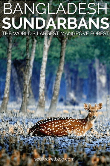 Dreaming of travel to Bangladesh? You won't want to miss travel in the Sundarbans, the world's largest mangrove forest! Find out how to travel there, insider tips and more for responsible travel in Bangladesh! Pin this post to one of your boards to find it again later!