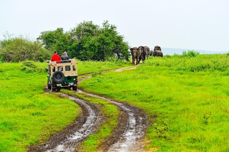 Safari in Kaudulla and Minneriya Sri Lanka