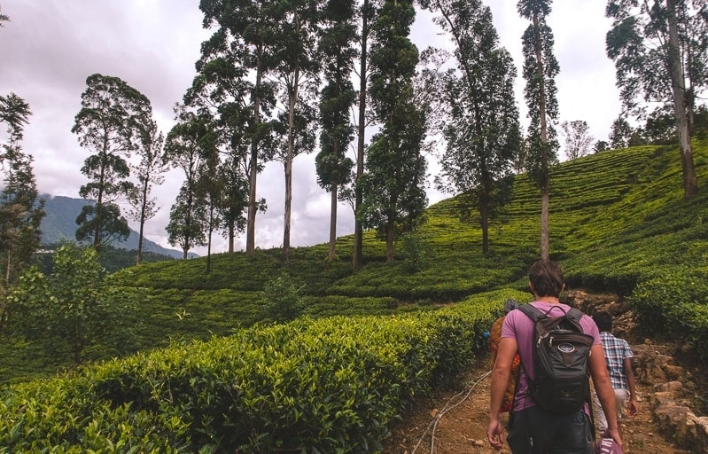 hiking tea plantations in Nuwara Eliya Sri Lanka