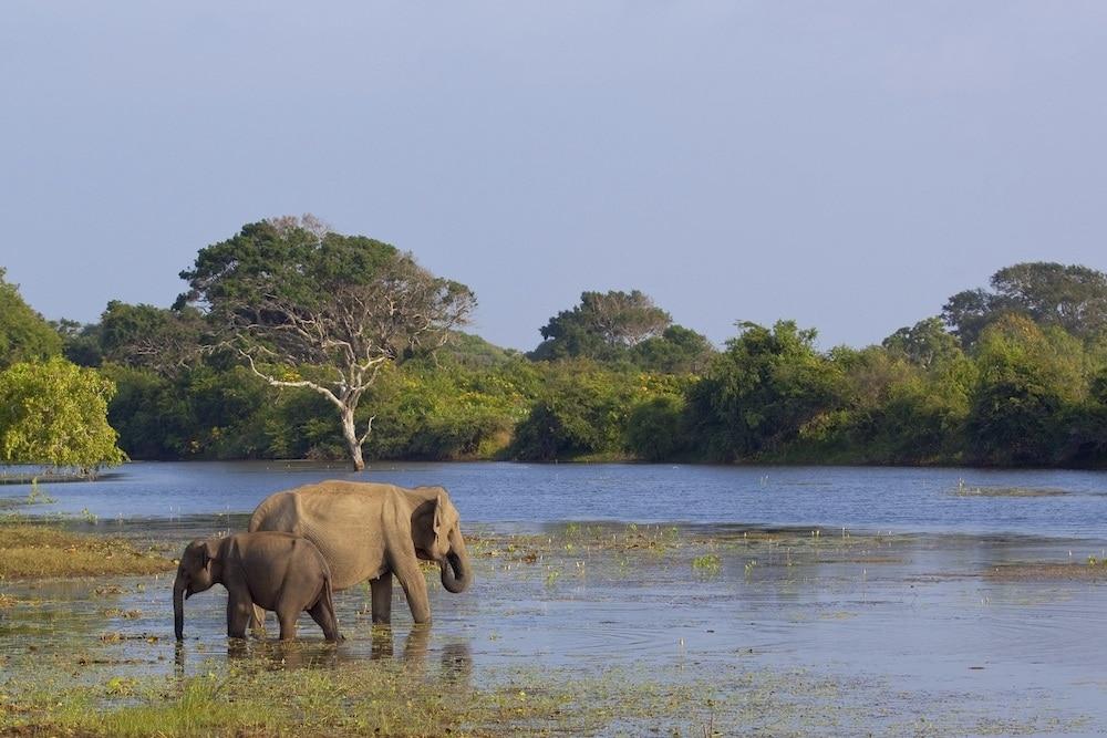 best Eco Lodges in Sri Lanka