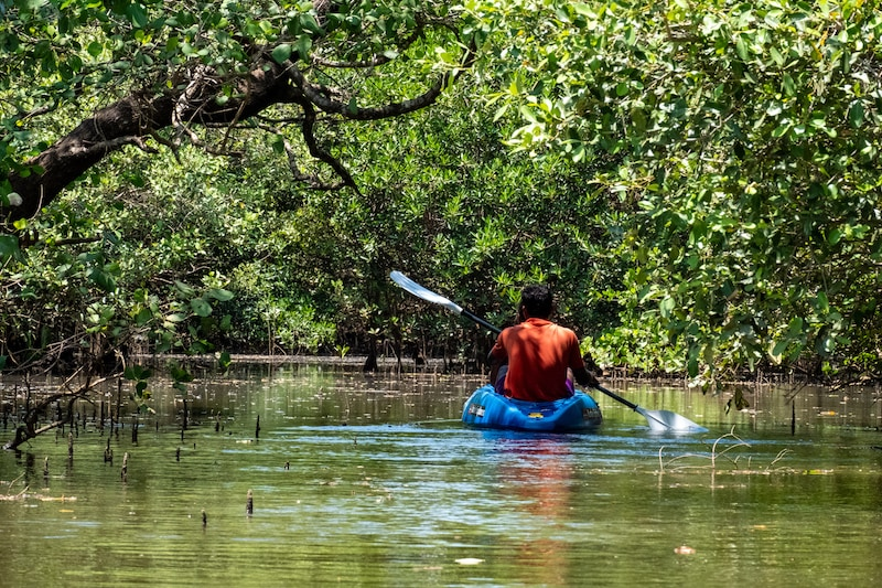 kayaking in goa through mangroves