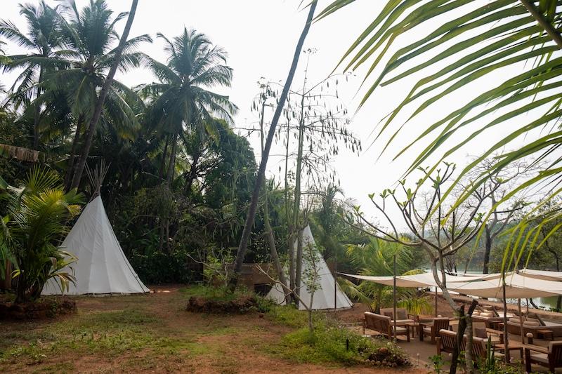 mangroves south goa