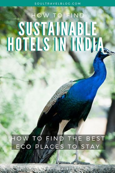 Read how to find the best sustainable hotels in India, eco lodges in #India and more India travel tips! #incredibleindia #indiatravel